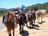 Esel-Tour
